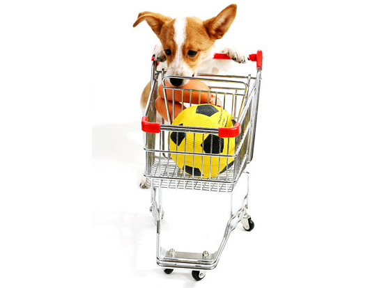 38151115 - dog with shopping cart isolated on white
